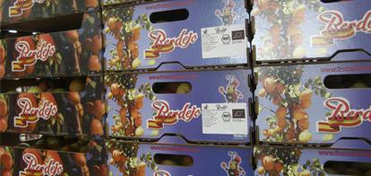 Albaricoque Frutas Berdejo