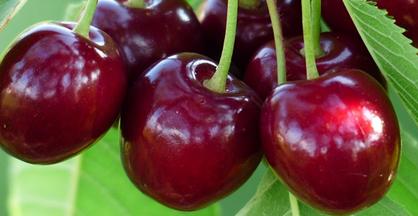 Cereza. Frutas Berdejo