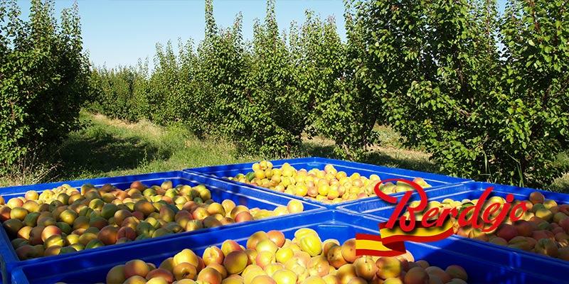 Frutas Berdejo