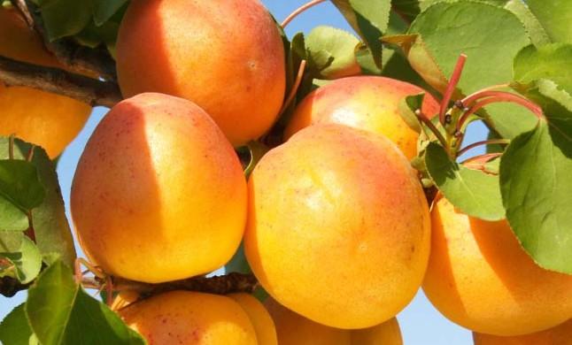 Frutas Berdejo protagonista en Heraldo de Aragón.