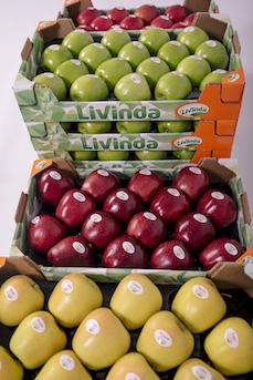 """Una de cada dos manzanas en España son de importación """"España reacciona para reivindicar su manzana en los lineales"""""""