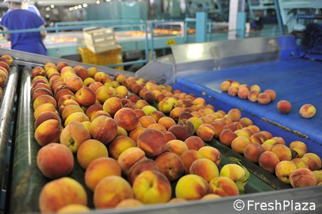 berdejo, fruta, aragón, aragon, zaragoza, mayorista frutas, albaricoque, albaricoque bio, albaricoque ecologico, apricot, albaricoque organico, bio apricot, organic apricot, ecologic apricot, fruta ecologica
