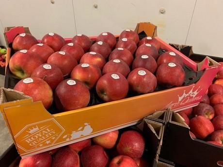 berdejo, fruta, frutas, aragón, aragon, zaragoza, mayorista frutas, albaricoque, albaricoque bio, albaricoque ecologico, apricot, albaricoque organico, bio apricot, organic apricot, ecologic apricot, fruta ecologica