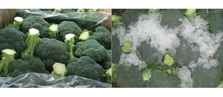 Cambio de paradigma con el envasado de brócoli sin hielo
