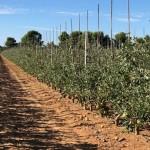 """""""La cosecha española de manzanas parece buena"""""""