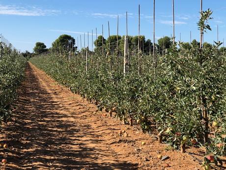 «La cosecha española de manzanas parece buena»