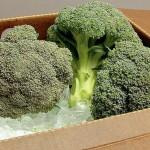 Nuevas tendencias en enfriamiento de brócoli