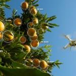 Llega a la citricultura española una tecnología revolucionaria para gestionar la producción mediante drones