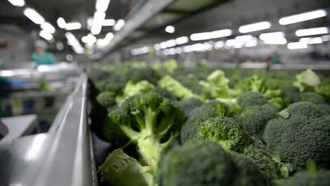 """«Pensábamos que el crecimiento del consumo de brócoli en Europa podía estar tocando techo"""""""