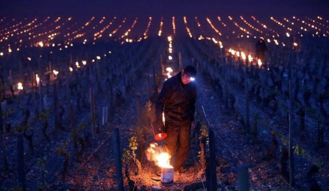 Heladas, el último golpe a la agricultura francesa.