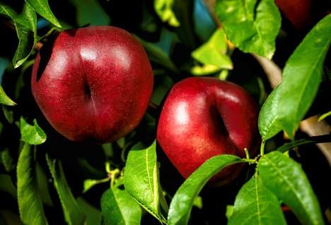 «A pesar de ser una primavera fría, hay más de demanda de fruta de hueso que de cítricos»