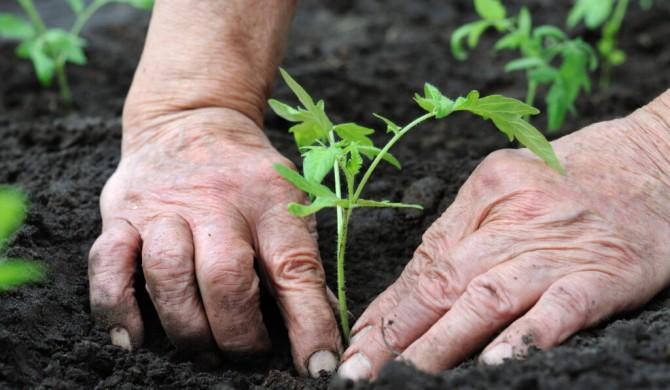 Cambio climático amenaza un tercio de la producción mundial de alimentos