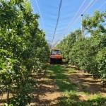 Llega a España una tecnología israelí para prever la producción en fincas y su distribución por calibre