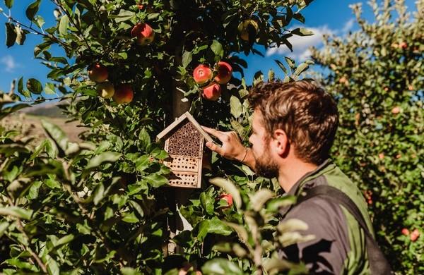 """Hoteles para """"bichos"""" en los campos de manzanas de Val Venosta"""