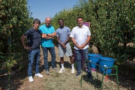 Inicia la cosecha de la pera de Lleida más corta de la historia