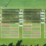 Ventajas y desventajas de la agricultura ecológica y convencional